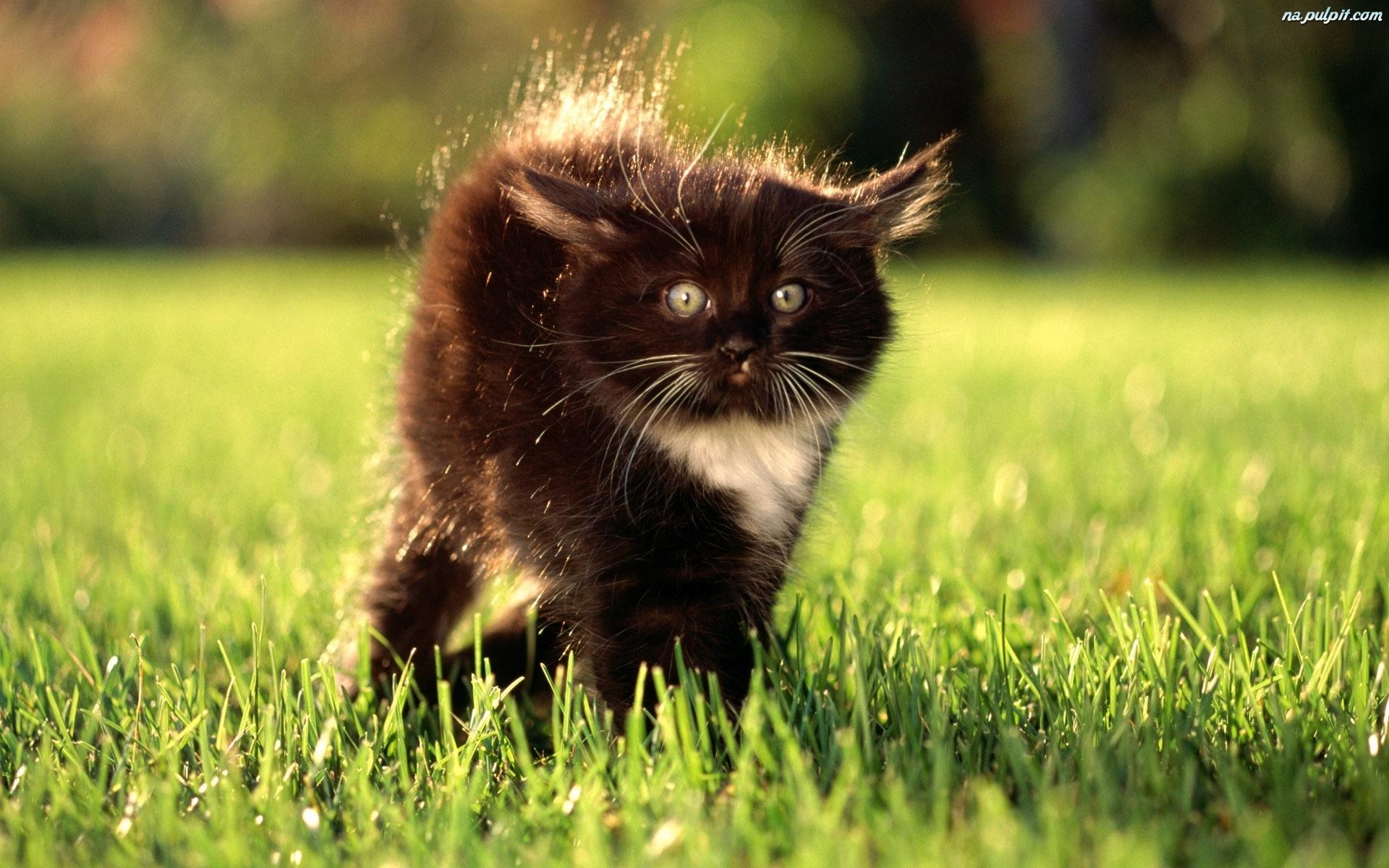 wystraszony-kotek-czarny.jpeg